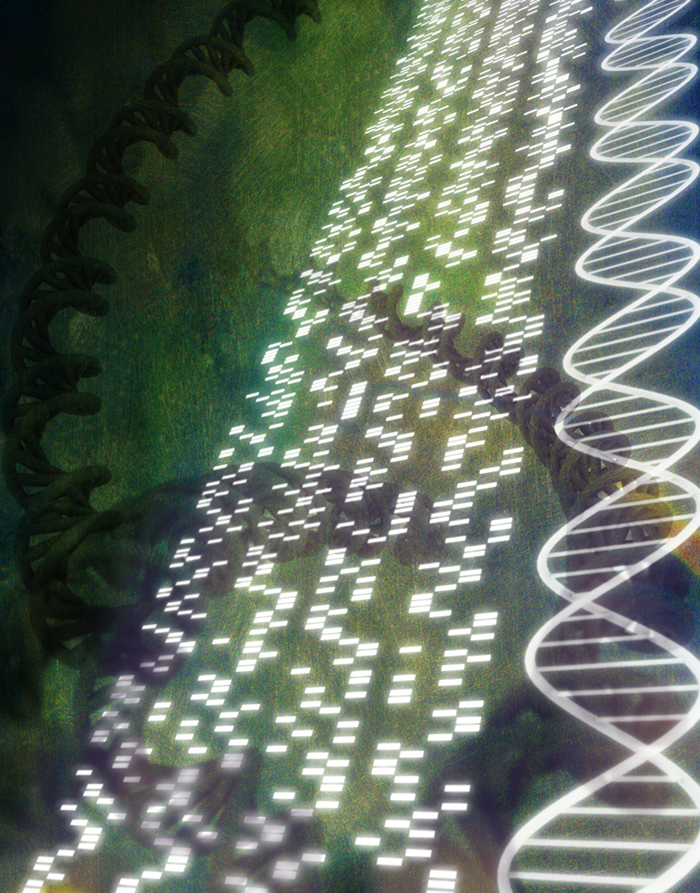 DNA sequence and helix models (Digital)